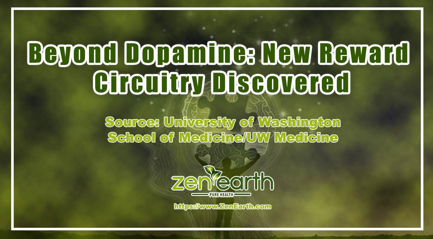 Beyond dopamine-New reward circuitry discovered